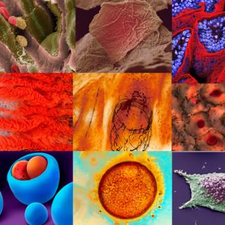 """Fotomontage av de vinnande bidragen av """"bioimages"""" på Wellcome Image Awards 2009."""