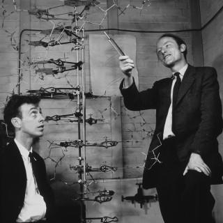 Watson och Crick upptäckte hur DNA fungerar