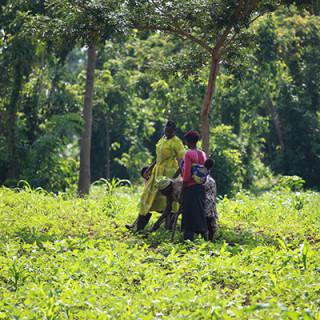 Starkare tillsammans: Bybor från Sere i Tororo-distriktet i sydöstra Uganda.